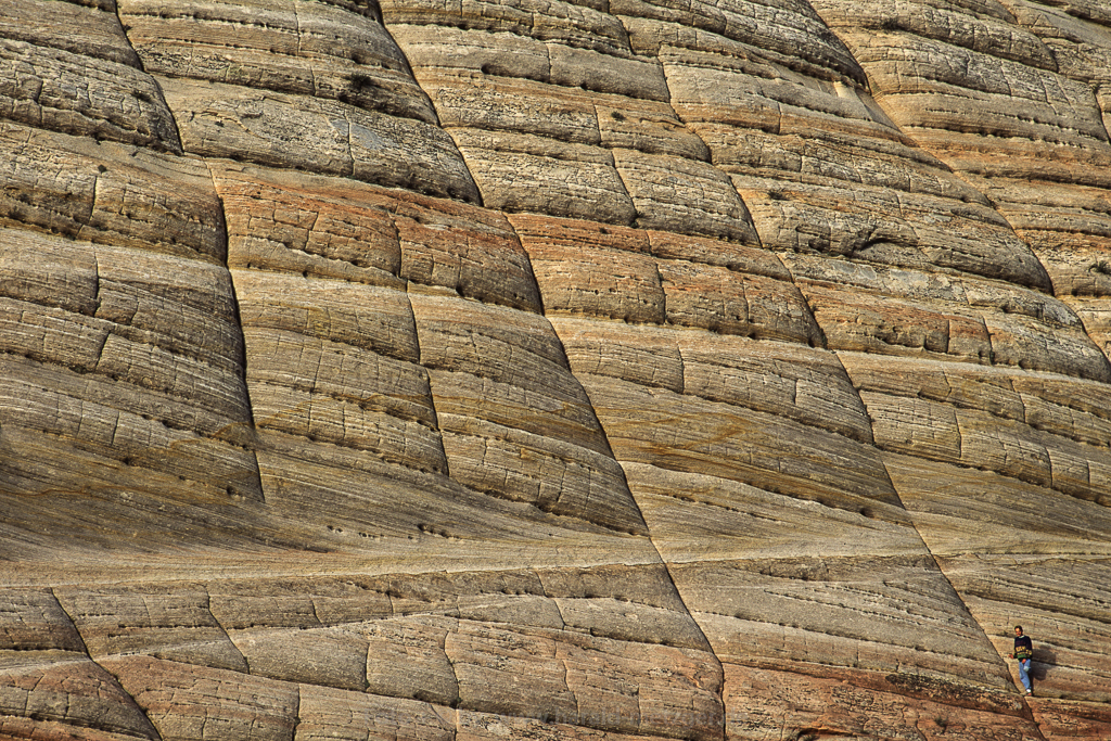 Checkerboard Mesa, Zion Nationalpark, Utah, USA, Erosion, Sanddüne